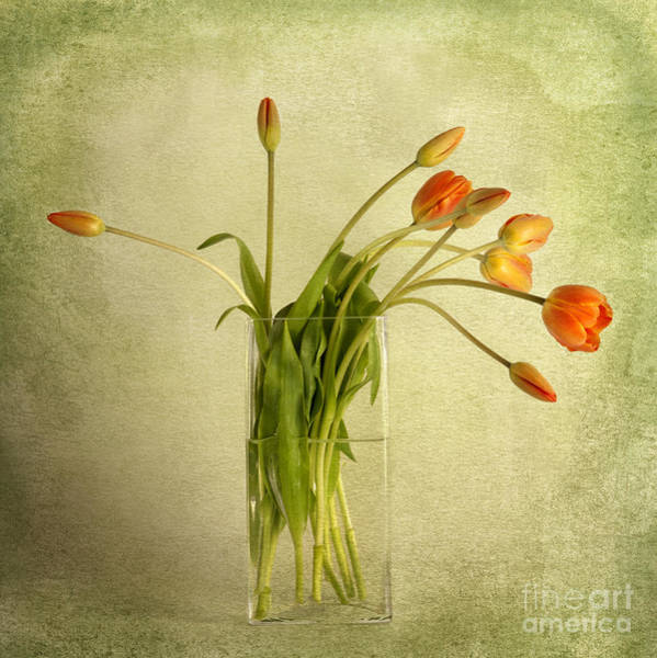 Flowers In A Vase Photograph - Tulips by Heather Swan