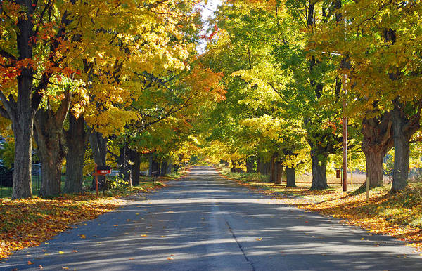 Traverse City Photograph - Tunnell Of Trees In Fall by Twenty Two North Photography