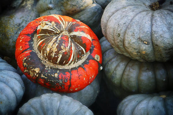Photograph - Turban Pumpkin by Joan Carroll