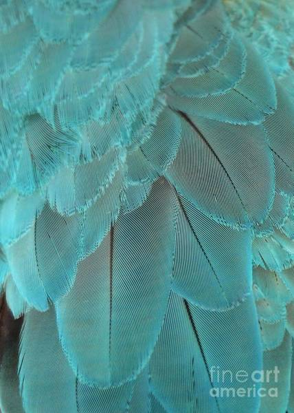 Photograph - Turquoise Blue Feathers by Sabrina L Ryan