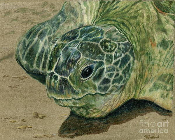 Turtle Beach Art Print by Norma Gafford