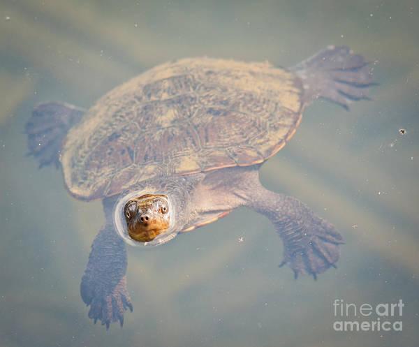 Atherton Tablelands Photograph - Turtle Curiosity by Johan Larson