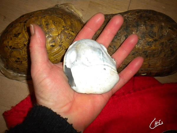 Photograph - Turtle Work Preparation For Egypt Desert  2012 by Colette V Hera  Guggenheim