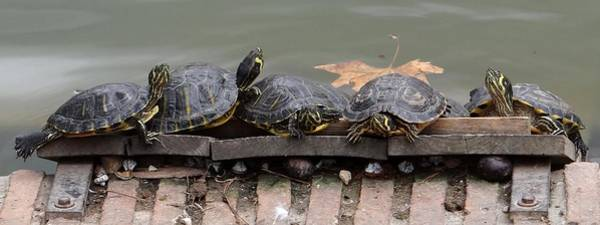 Photograph - Turtles In Spain by Keith Stokes
