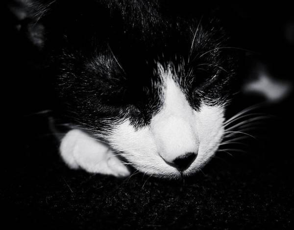 Photograph - Tuxedo Kitten by Maggy Marsh