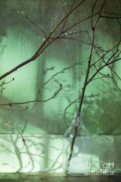 Blue Vase Photograph - Twigs Shadows And An Empty Beer Jug by Priska Wettstein