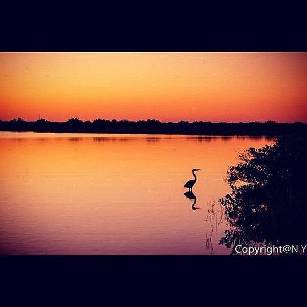 Egret Photograph - #twilight #sunset #color #vibrant by Naveen Yellappa