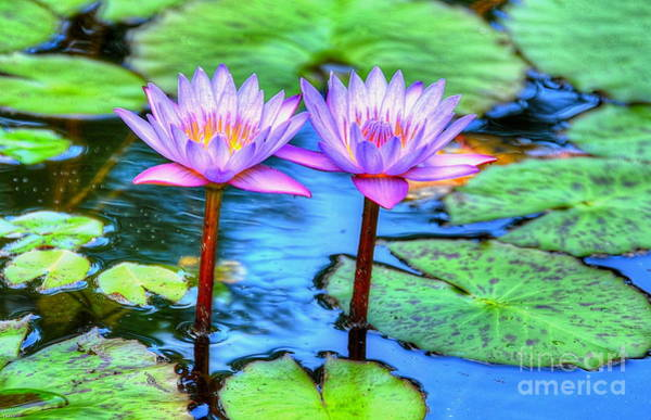 Lillypad Photograph - Twin Lilies by Debbi Granruth