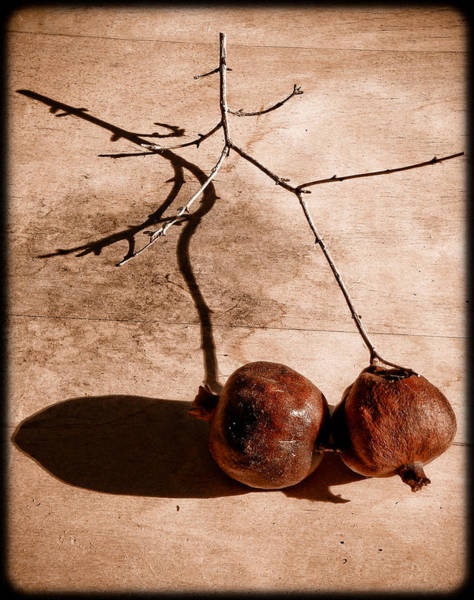 Albuquerque, New Mexico - Twin Pomegranates Art Print
