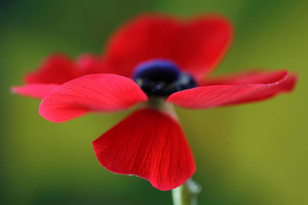 Photograph - Twirling Red by Juergen Roth