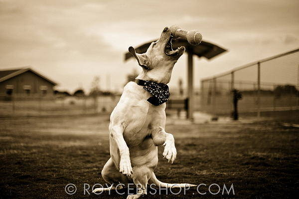 Photograph - Twist And Fetch by Royce Bishop
