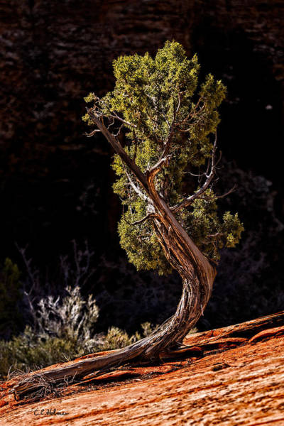Photograph - Twisted Reach by Christopher Holmes
