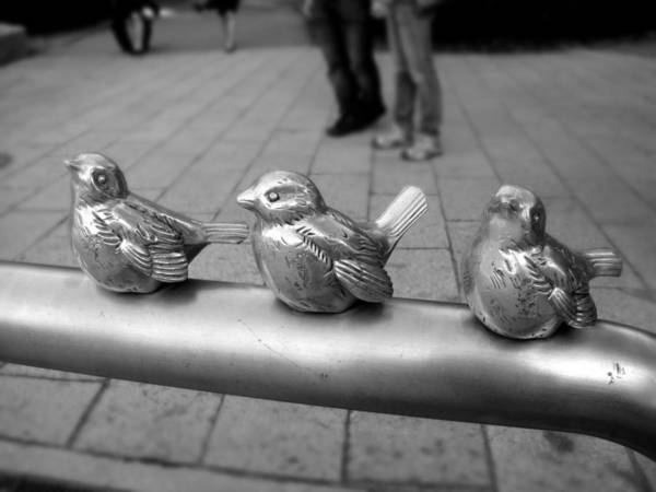 Photograph - Twitters by Roberto Alamino