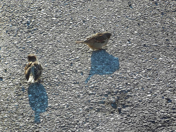 Photograph - Two Birds by Anne Cameron Cutri