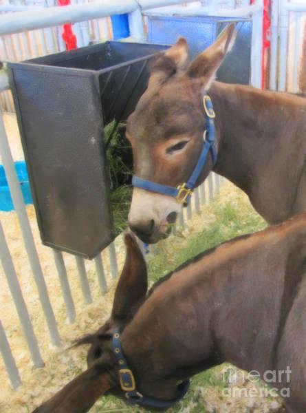 Digital Art - Two Donkeys Eating by Donna L Munro