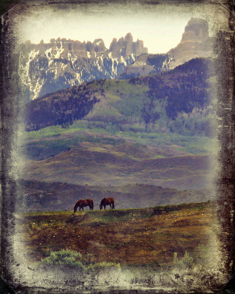 Photograph - Two Horses by Rick Wicker
