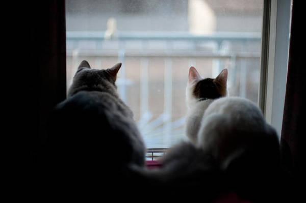 Okayama Prefecture Photograph - Two Munchkin Cats by Nazra Zahri