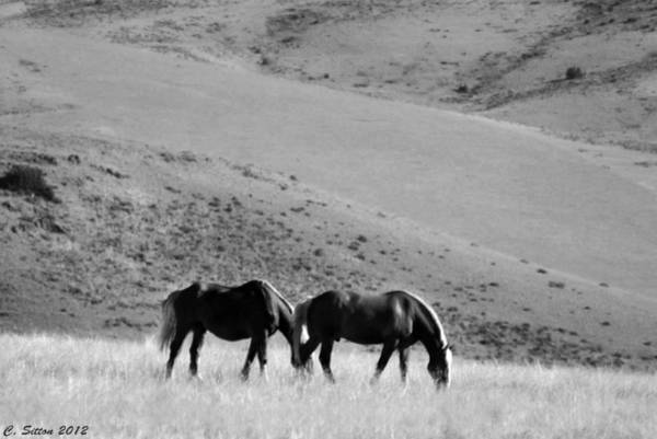 Photograph - Two Of A Kind by C Sitton