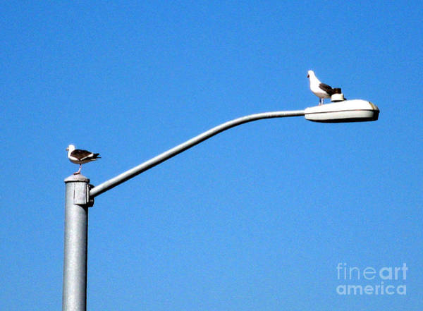 Photograph - Two Seagulls On Street Light by Christopher Shellhammer