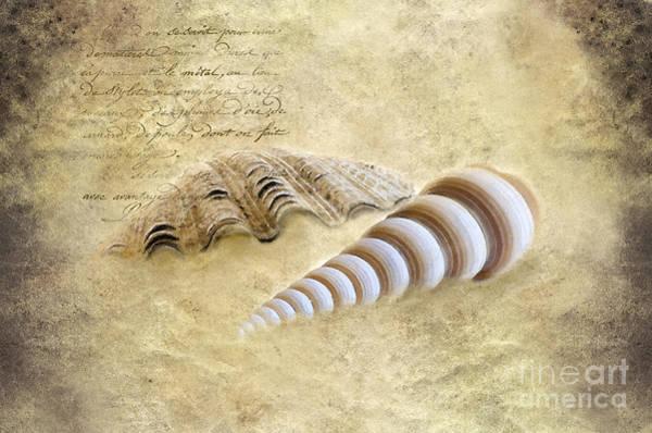 Three Seashells Photograph - Two Seashells by Betty LaRue