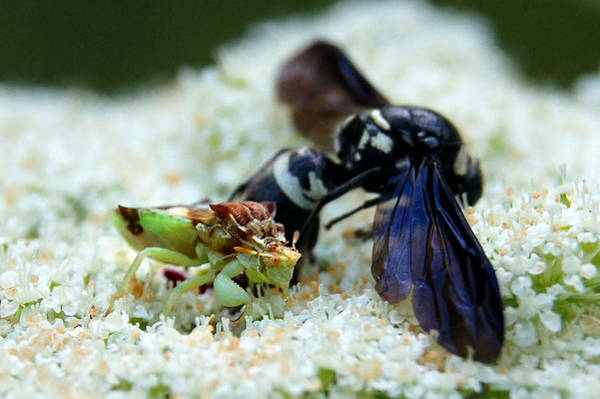 Ugly Photograph - Ugly Bug Feast 2 by Bill Pevlor