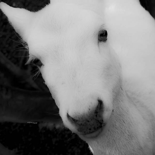 Petting Zoo Photograph - Um Excuse Me by DigiArt Diaries by Vicky B Fuller
