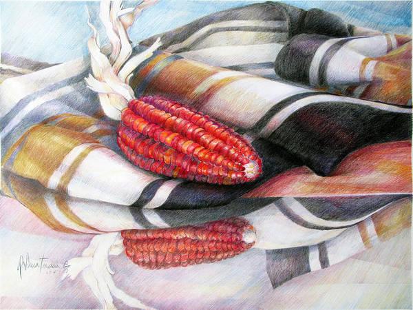 Indian Corn Drawing - Un Choclo by Sonia Tudela