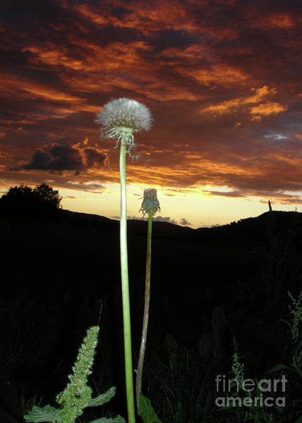 Dandelion Puff Photograph - Uncanny Clouds by Bruno Santoro