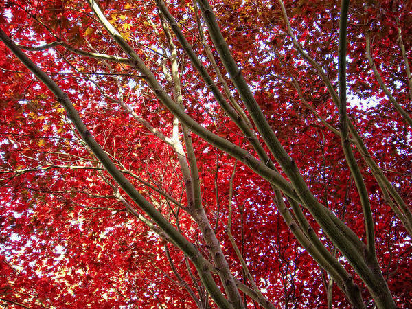 Wall Art - Photograph - Under A Red Canopy by Donna Blackhall