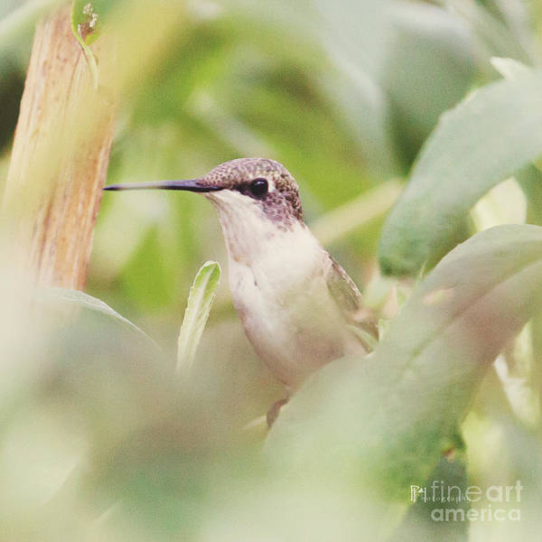 Photograph - Under Cover Hummer by Pam  Holdsworth