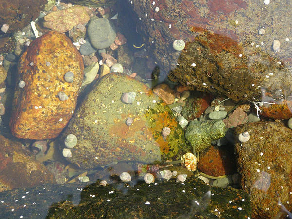 Photograph - Under-water Rocks by Frederic Durville