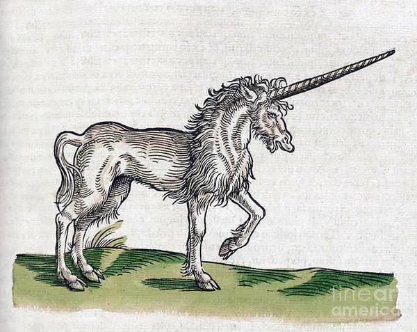 Unicorn Wall Art - Photograph - Unicorn by Science Source