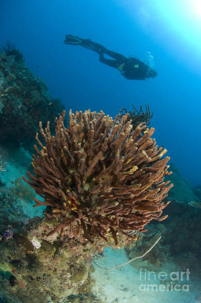 Photograph - Unidentified Species Of Sponge by Steve Jones