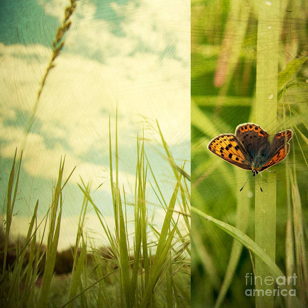 Butterfly Wall Art - Photograph - Unveil by Violet Gray