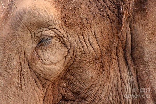 Photograph - Up Close And Personal by Mary Mikawoz