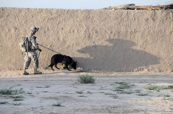 Dod Wall Art - Photograph - Us Army Working Dog Team Conducts by Everett