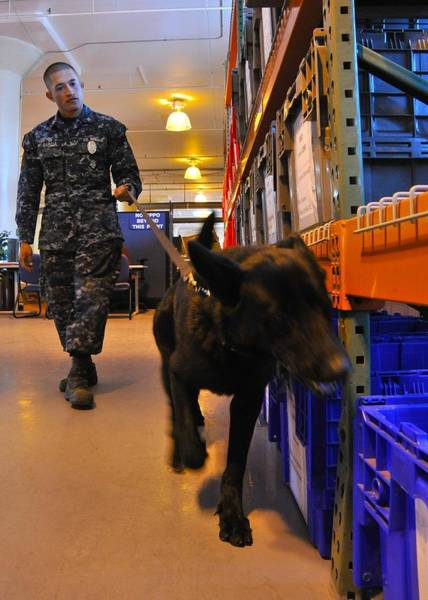 Dod Wall Art - Photograph - Us Navy Working Dog Jake Is Put by Everett
