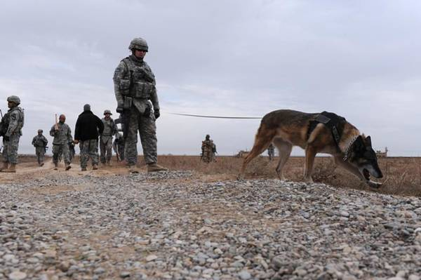 Dod Wall Art - Photograph - Us Soldier And His Working Dog Search by Everett