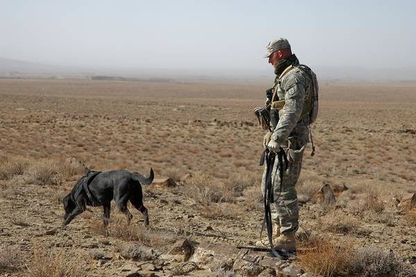 Dod Wall Art - Photograph - Us Soldier Works With A Dog Identified by Everett