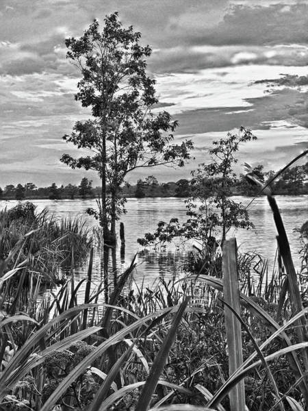 Photograph - Vegetation By The River by Mike Covington
