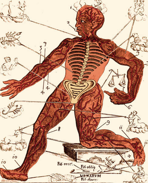 Photograph - Vein Man Medical Astrology 17th by Science Source