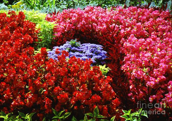 Photograph - Versailles Garden Flowers by Donna L Munro