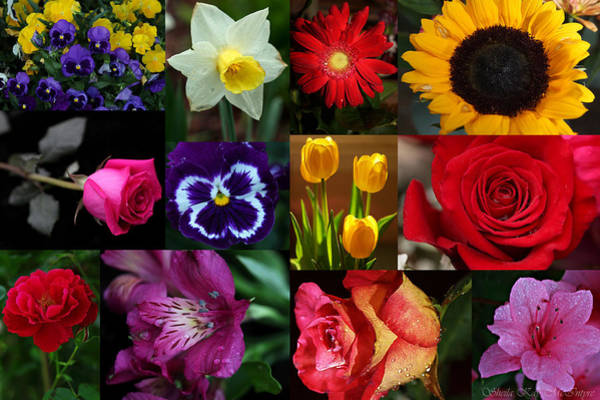Photograph - Vibrant Flower Collage by Sheila Kay McIntyre