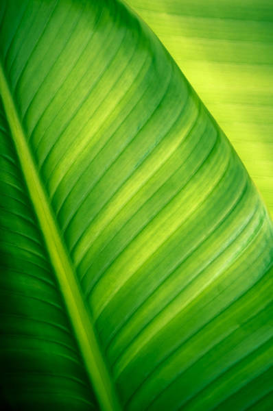 Wall Art - Photograph - Vibrant Green Leaf by Joe Carini - Printscapes