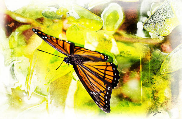 Photograph - Viceroy Butterfly by Barry Jones