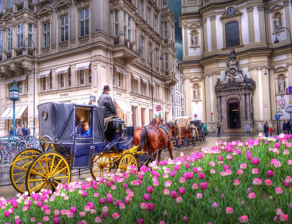 Vienna Photograph - Vienna Fiaker Peterskirche Tulips by Juli Scalzi