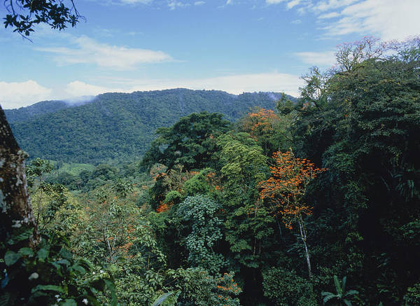 Wall Art - Photograph - View Across Rainforest In Trinidad by Dr Morley Read
