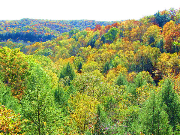 Hocking Hills Photograph - View Of Conkles Hollow by Vijay Sharon Govender