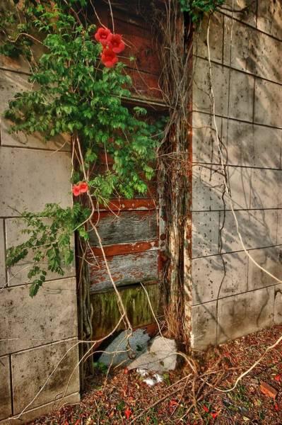 Digital Art - Vine Covered Door by Michael Thomas