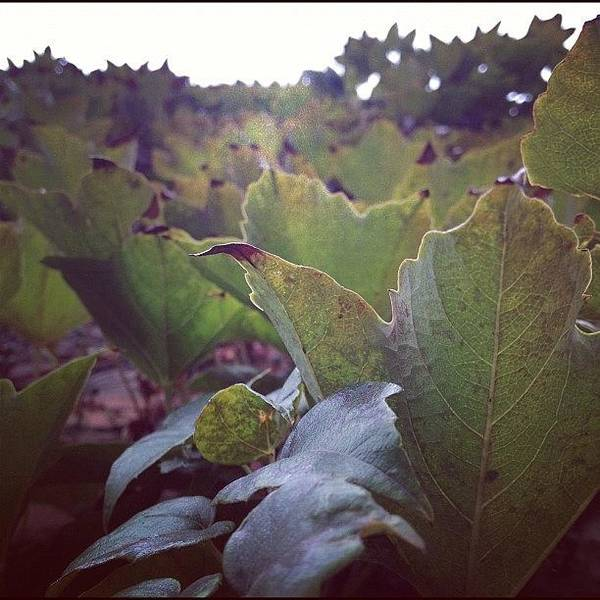Politicians Wall Art - Photograph - Vine Covered Wall. #instgrambham by Thomas Jefferson Tower